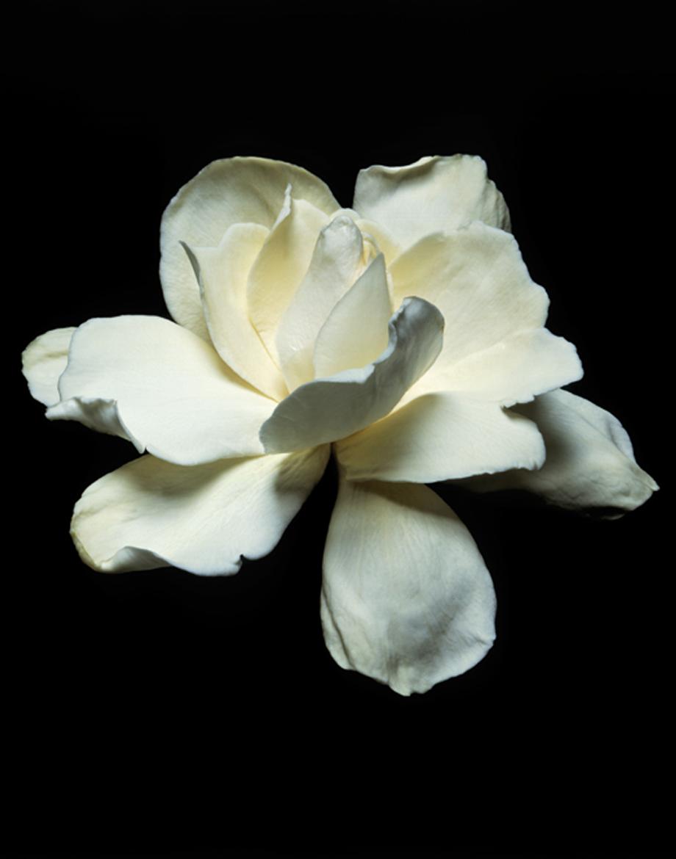 White Gardenia Series Of 3 Shop Mmcurate